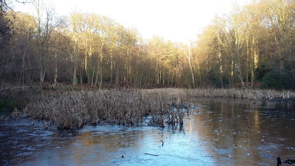 Burnham Beeches