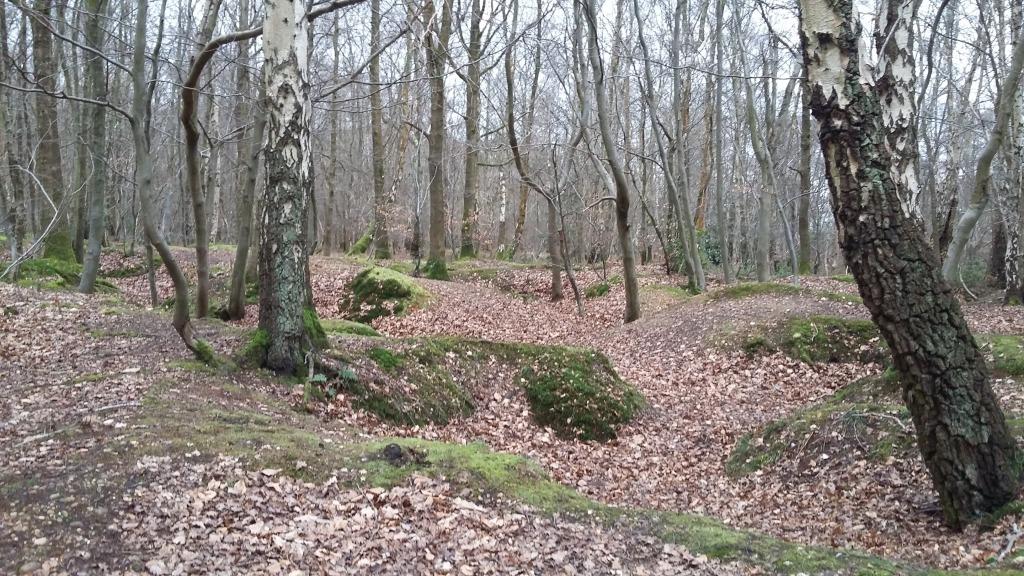 Marlow Common Woods