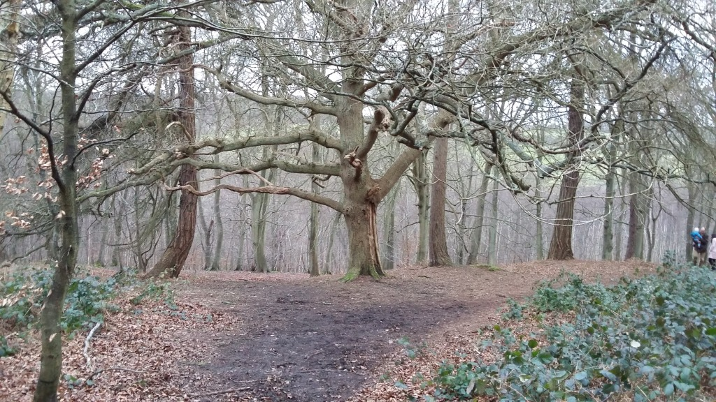 Marlow Common Woods