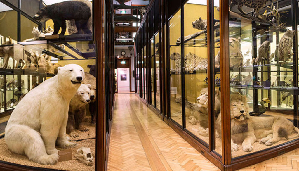 main_museum