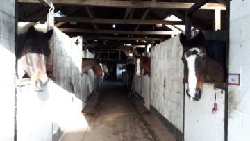 GroveStables_featured