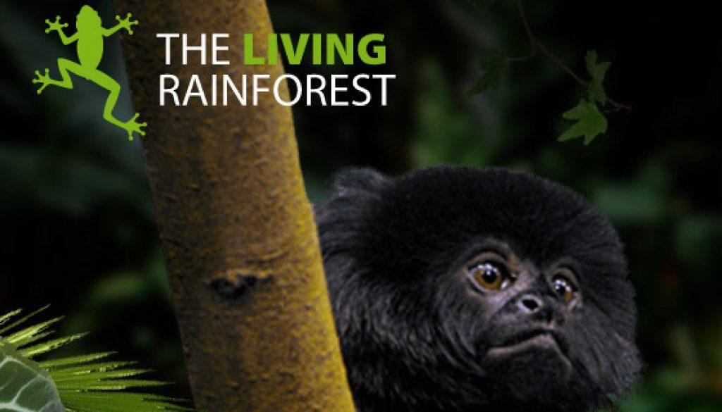 the-living-rainforest
