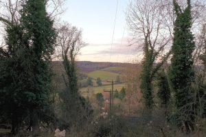 Pheasants Hill family walk trees