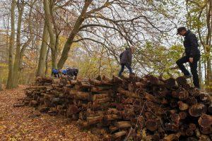Hambleden family walk over logs