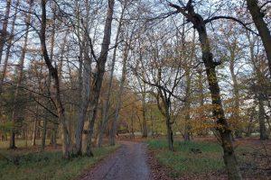 Hambleden family walk woods