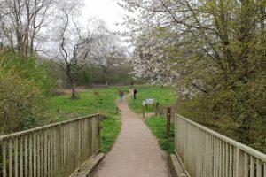 Maidenhead thicket family walk bridge