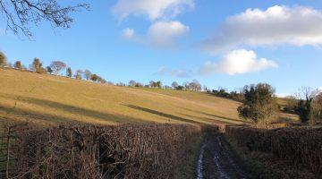 shillingridge woods family walk