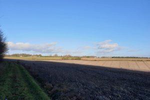 Shillingridge woods family walk field