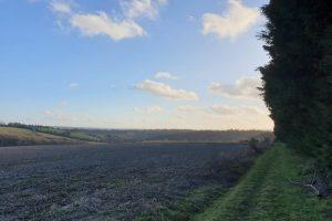 Shillingridge woods family walk field 2