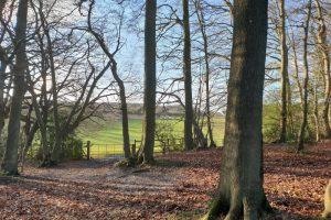 Shillingridge woods family walk woods