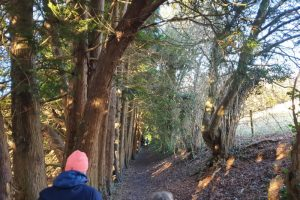 Shillingridge woods family walk woods path