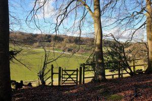 Shillingridge woods family walk field view