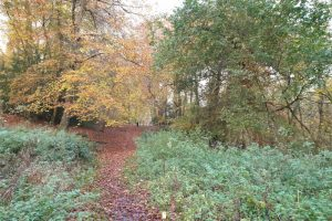 turville family walk woodland view