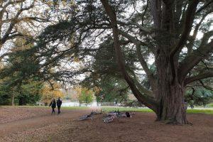 Windsor Park family bike ride trees