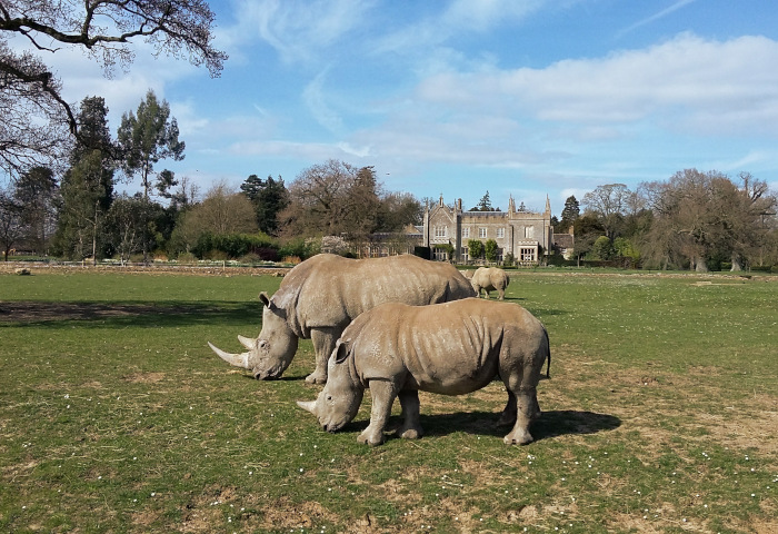Cotswold Wildlife Park Family Day Out