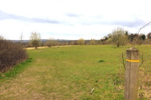 Munces Wood Family Walk Grassland