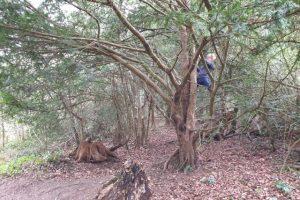 Munces wood family walk tree climbing