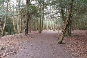 Munces Wood Family Walk Woodland