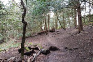Munces wood family walk uphill