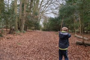 Munces Wood Family Walk Woodland views