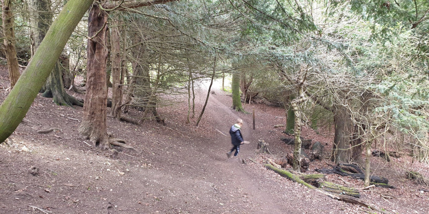 Munces Wood Family Walk