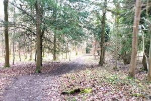 Frieth village family walk woodland