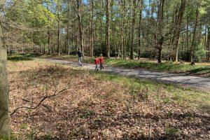 Ashley Hill family walk woodland