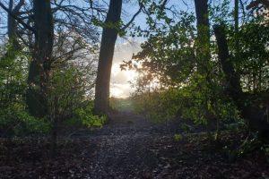 moor-common-family-walk-sunlight (Small)