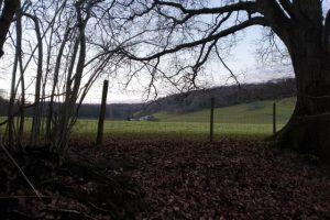 Turville Heath Family Walk Woodland